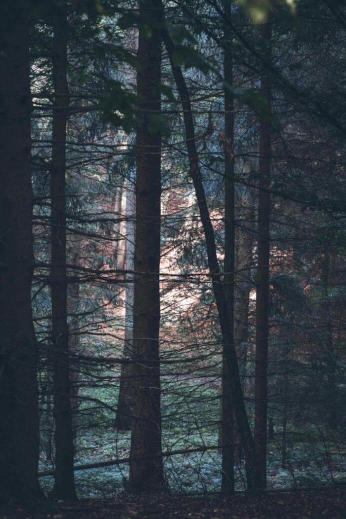 wald-im-morgengrauen